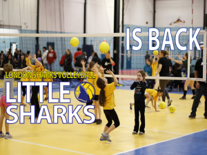 Little Sharks is back!
